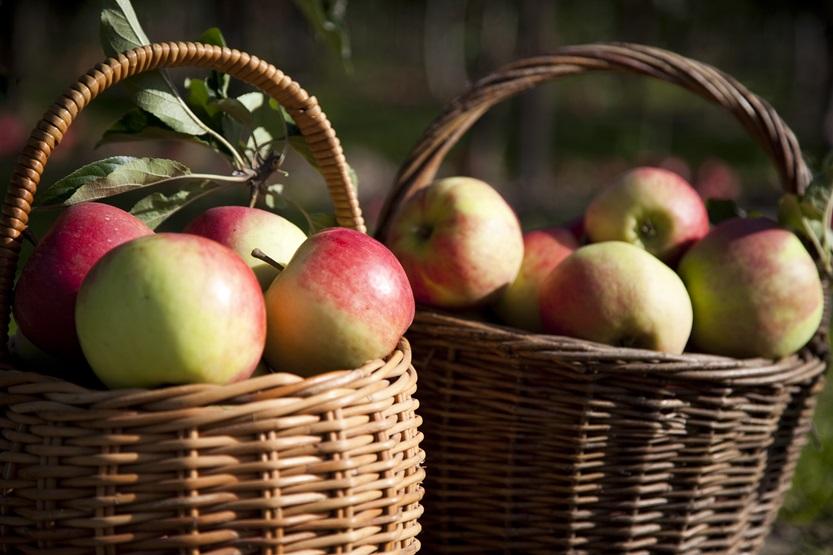 Fællesspisning, sang og høstmarked – torsdag den 8. oktober